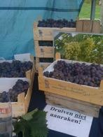 grape farm nieuw tuinzight - pure markt amsterdam